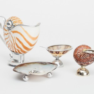 seashell-africanheart-189Lowres